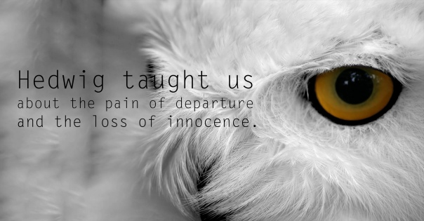 Hedwig - See the 30 Things That Harry Potter taught us